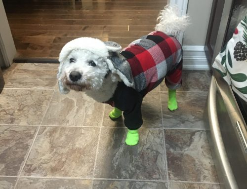 Dressed for a very cold day in Labrador!